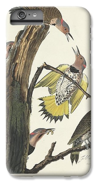 Gold-winged Woodpecker IPhone 6 Plus Case by Dreyer Wildlife Print Collections