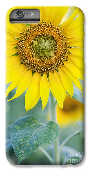 Golden Sunflower IPhone 6 Plus Case