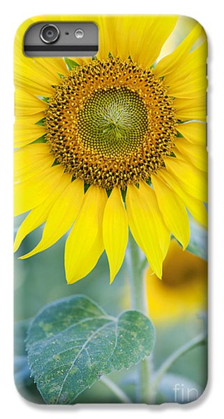 Sunflower iPhone 6 Plus Case - Golden Sunflower by Tim Gainey