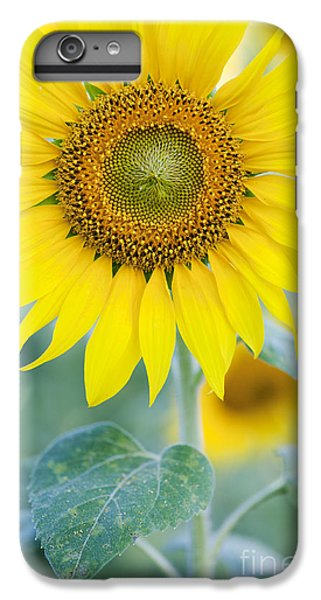 Golden Sunflower IPhone 6 Plus Case by Tim Gainey