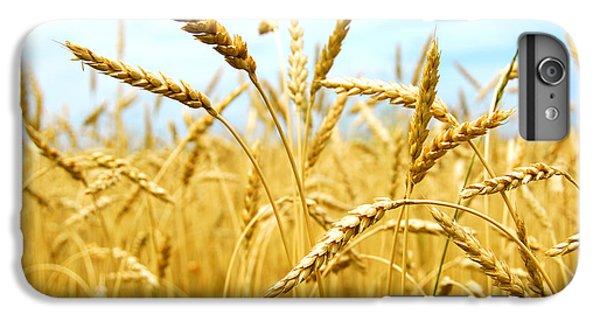 Grain Field IPhone 6 Plus Case by Elena Elisseeva