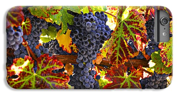 Grapes On Vine In Vineyards IPhone 6 Plus Case by Garry Gay