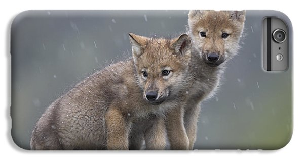 Wolves iPhone 6 Plus Case - Gray Wolf Canis Lupus Pups In Light by Tim Fitzharris