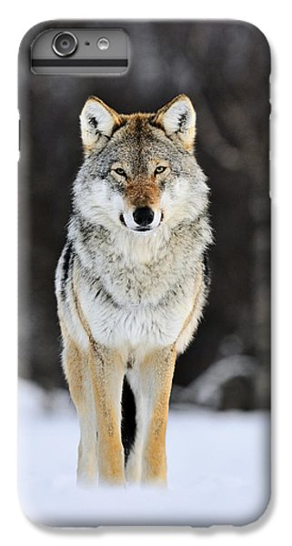Wolves iPhone 6 Plus Case - Gray Wolf In The Snow by Jasper Doest