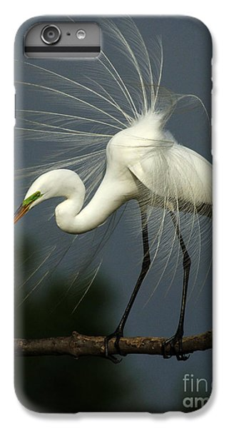 Majestic Great White Egret High Island Texas IPhone 6 Plus Case by Bob Christopher