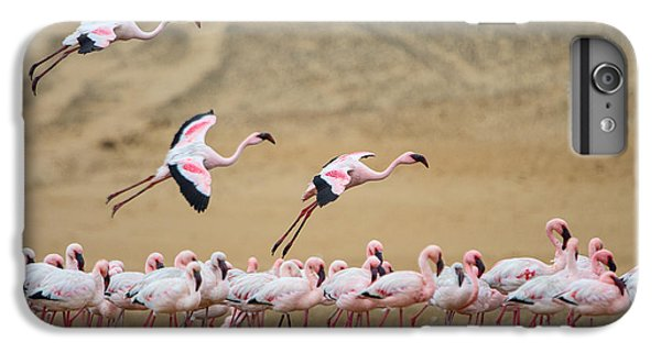 Greater Flamingos Phoenicopterus IPhone 6 Plus Case by Panoramic Images