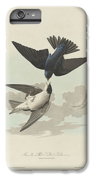 Green-blue Or White-bellied Swallow IPhone 6 Plus Case