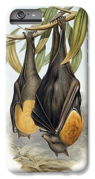Grey Headed Flying Fox, Pteropus Poliocephalus IPhone 6 Plus Case by John Gould