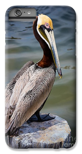 Grey Pelican IPhone 6 Plus Case by Inge Johnsson