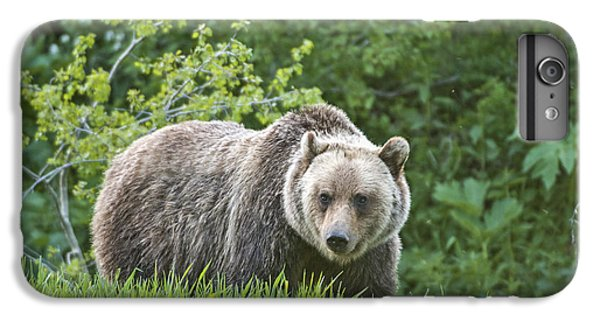 IPhone 6 Plus Case featuring the photograph Grizzly Bear by Gary Lengyel