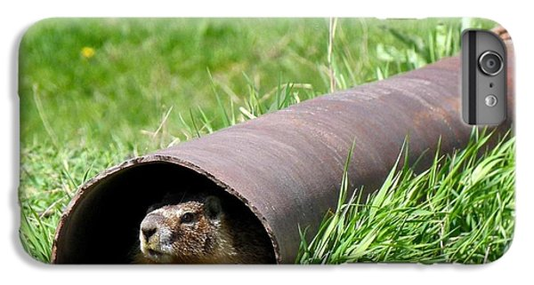 Groundhog In A Pipe IPhone 6 Plus Case by Will Borden