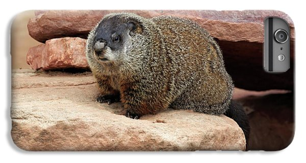 Groundhog IPhone 6 Plus Case by Louise Heusinkveld