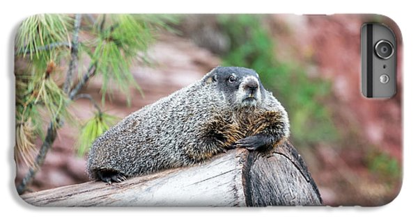Groundhog On A Log IPhone 6 Plus Case by Jess Kraft