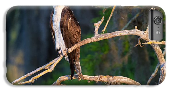 Grumpy Osprey Not Ready For Its Picture IPhone 6 Plus Case