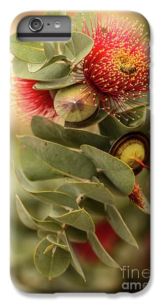Gum Nuts IPhone 6 Plus Case by Werner Padarin