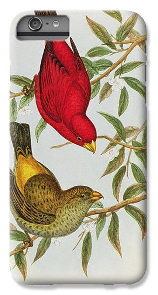 Haematospiza Sipahi IPhone 6 Plus Case by John Gould