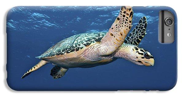 Water Ocean iPhone 6 Plus Case - Hawksbill Sea Turtle In Mid-water by Karen Doody