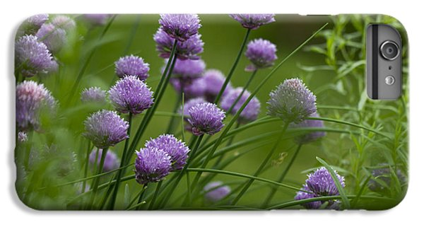 Herb Garden. IPhone 6 Plus Case