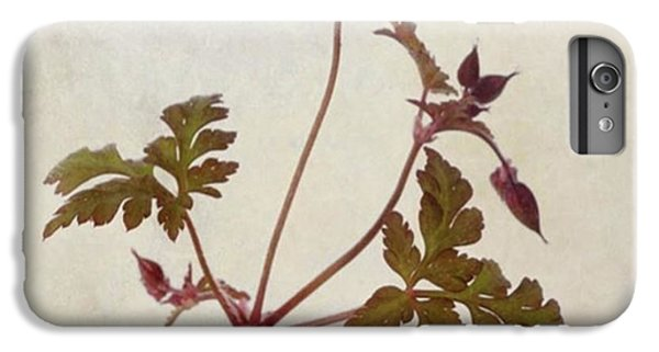 Herb Robert - Wild Geranium  #flower IPhone 6 Plus Case