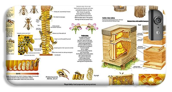 Honeybee iPhone 6 Plus Case - Honey Bees Infographic by Gina Dsgn