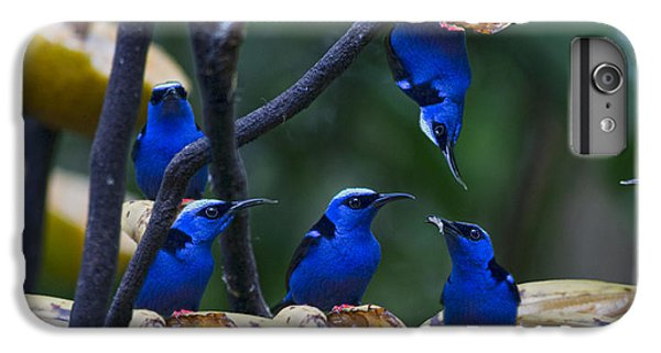 Honeycreeper IPhone 6 Plus Case by Betsy Knapp