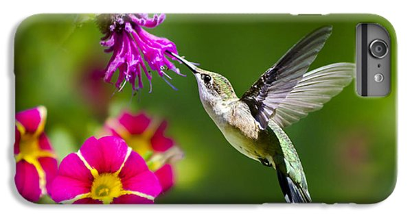 Hummingbird With Flower IPhone 6 Plus Case by Christina Rollo