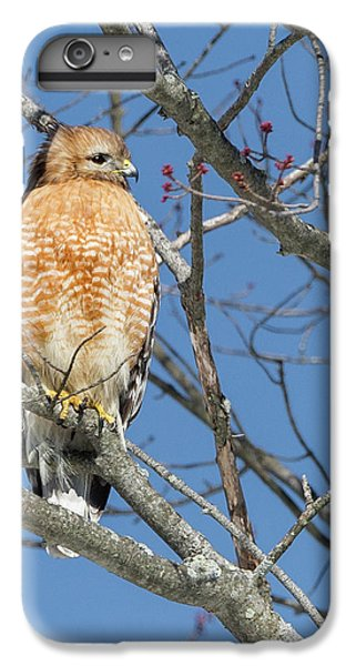 IPhone 6 Plus Case featuring the photograph Hunting by Bill Wakeley