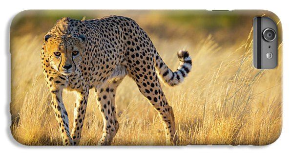 Hunting Cheetah IPhone 6 Plus Case by Inge Johnsson