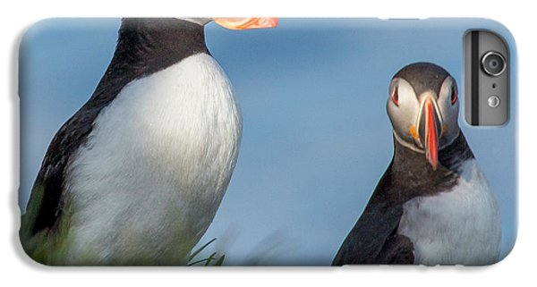 Puffin iPhone 6 Plus Case - Iceland Puffins  by Betsy Knapp