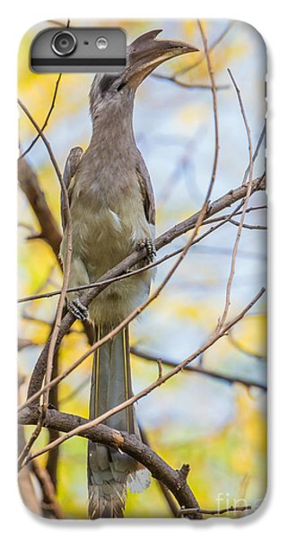 Indian Grey Hornbill IPhone 6 Plus Case by B. G. Thomson