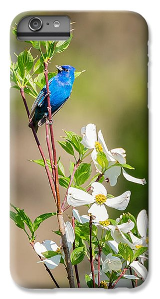 Indigo Bunting In Flowering Dogwood IPhone 6 Plus Case by Bill Wakeley