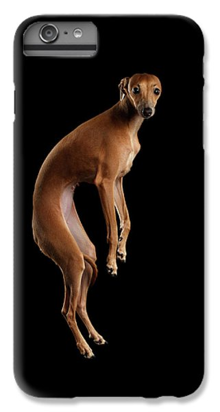 Dog iPhone 6 Plus Case - Italian Greyhound Dog Jumping, Hangs In Air, Looking Camera Isolated by Sergey Taran