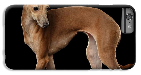 Dog iPhone 6 Plus Case - Italian Greyhound Dog Standing  Isolated by Sergey Taran