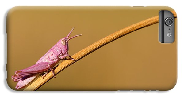 Grasshopper iPhone 6 Plus Case - It's Not Easy Being Pink by Roeselien Raimond