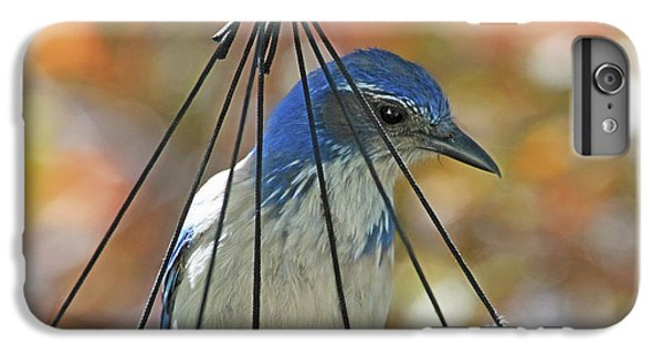Bluejay iPhone 6 Plus Case - Jail Bird by Donna Kennedy