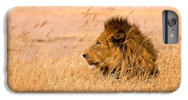 Africa iPhone 6 Plus Case - King Of The Pride by Adam Romanowicz