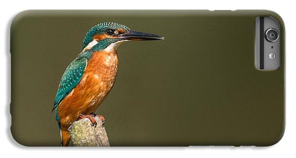 Kingfisher iPhone 6 Plus Case - Kingfisher by Ian Hufton