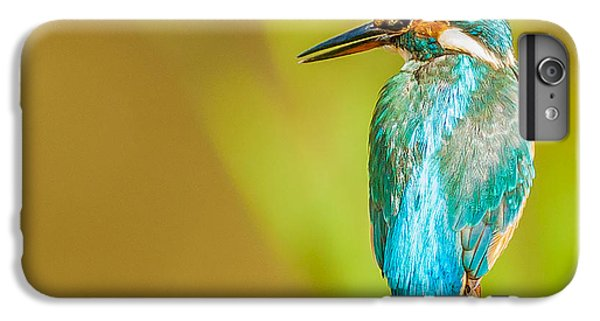 Kingfisher iPhone 6 Plus Case - Kingfisher by Paul Neville