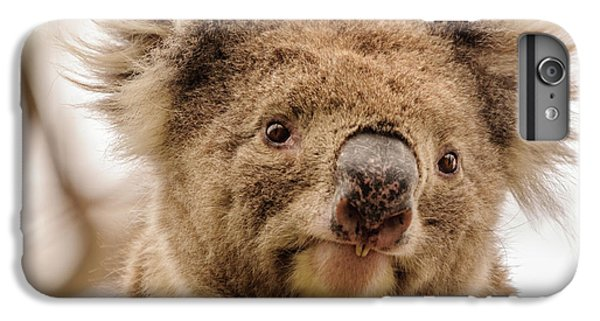 Koala 4 IPhone 6 Plus Case by Werner Padarin