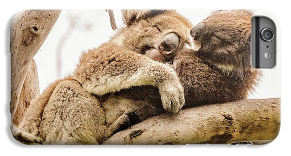 Koala 5 IPhone 6 Plus Case by Werner Padarin