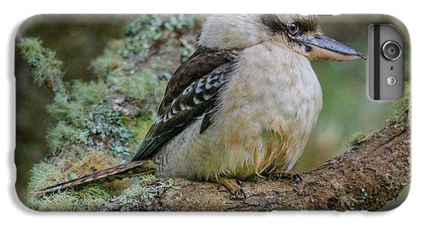 Kookaburra 4 IPhone 6 Plus Case