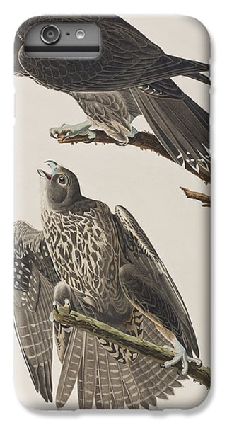Labrador Falcon IPhone 6 Plus Case by John James Audubon