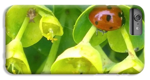 Green iPhone 6 Plus Case - #ladybug Found Some Shelter From The by Shari Warren