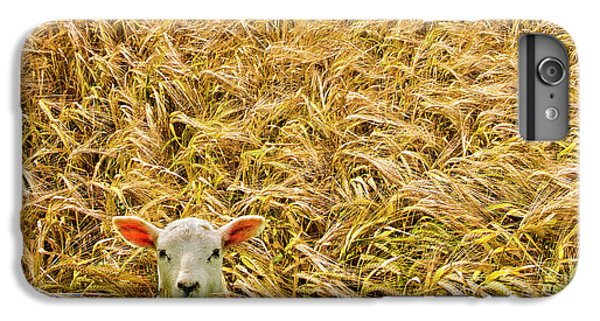 Lamb With Barley IPhone 6 Plus Case by Meirion Matthias