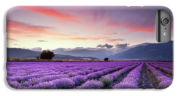 Landscape iPhone 6 Plus Case - Lavender Season by Evgeni Dinev
