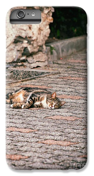 IPhone 6 Plus Case featuring the photograph Lazy Cat    by Silvia Ganora
