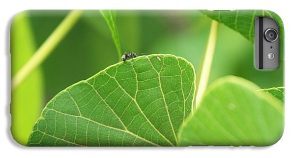 Ant iPhone 6 Plus Case - Leaf And Ant by Kathleen Wong