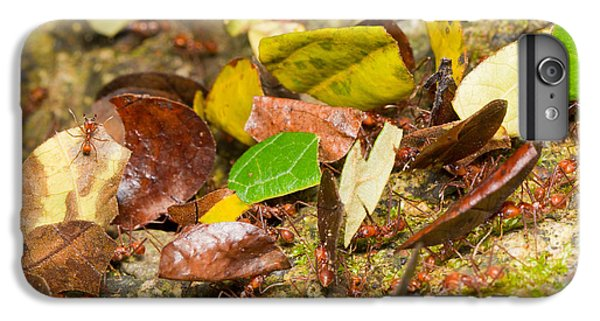 Leaf-cutter Ants IPhone 6 Plus Case by B.G. Thomson