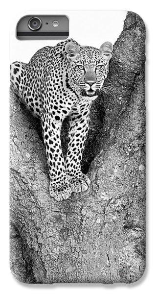 Leopard In A Tree IPhone 6 Plus Case by Richard Garvey-Williams