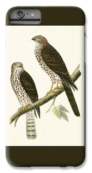 Levant Sparrow Hawk IPhone 6 Plus Case